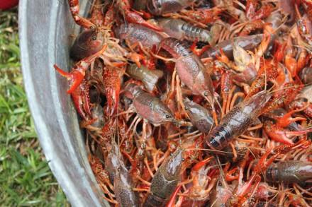 preparing for crawfish boil