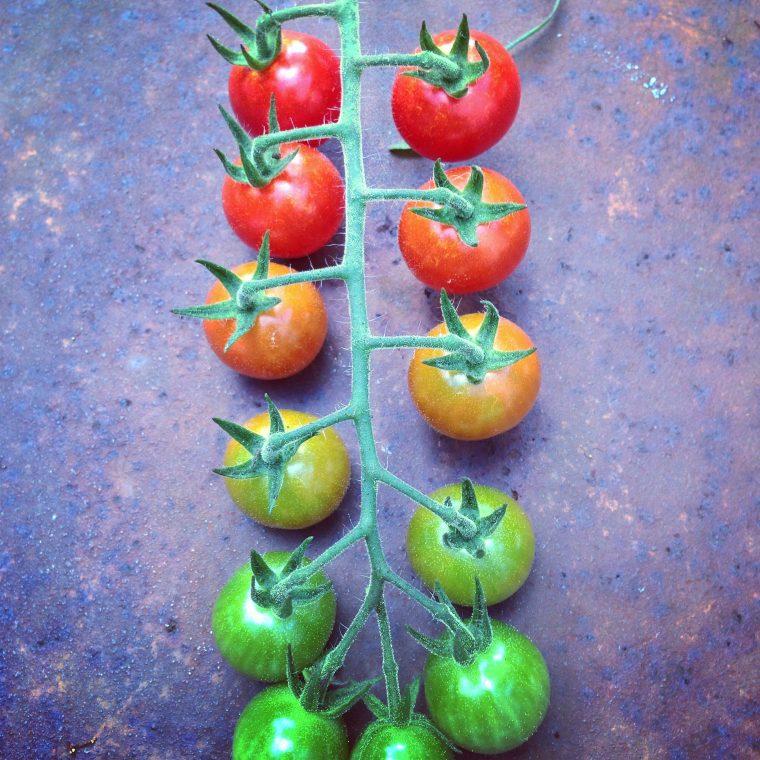 Basil Green Goddess Dressing & Slow-Roasted Tomatoes - Eat ...